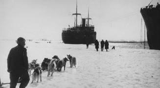 Животный мир ледяной пустыни
