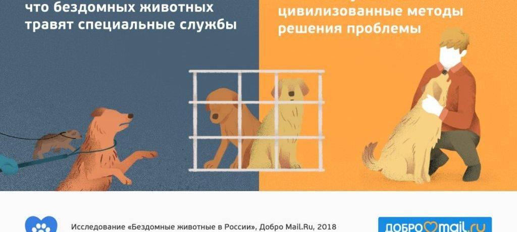 Как помочь животным
