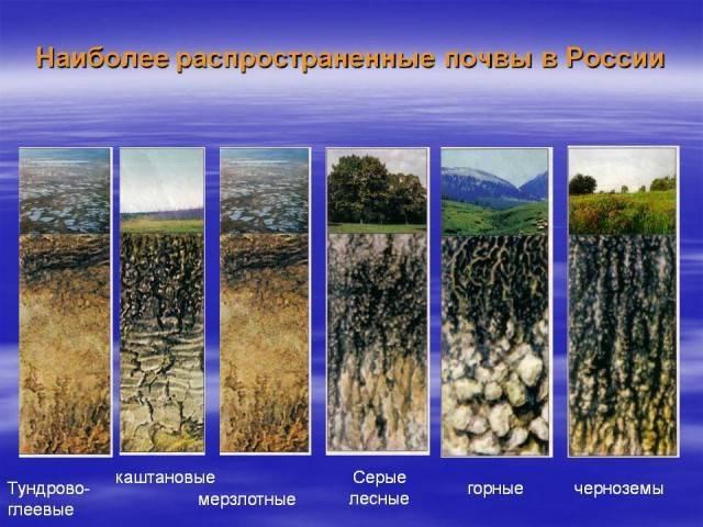 Почвы юга россии