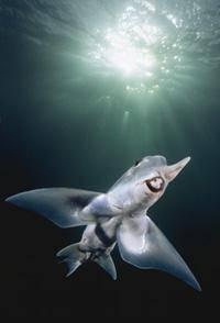 Страшные рыбы на дне океана фото