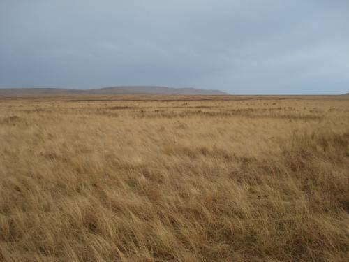 Краткая характеристика зоны степей