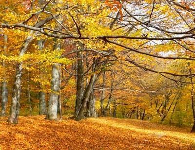 Описание леса осенью
