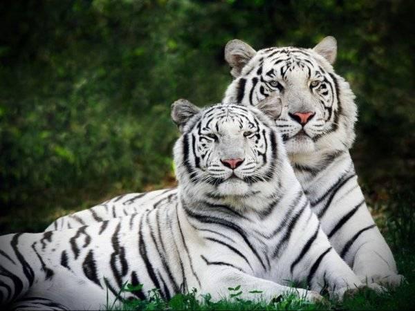 Виды размножения животных