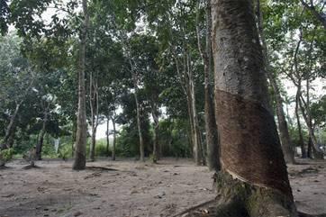 Лес регулятор биоразнообразия