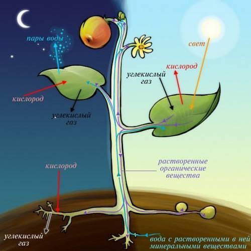 Где происходит процесс фотосинтеза