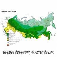 В какой природной зоне находится россия