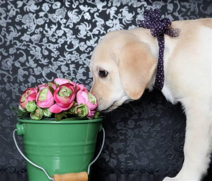 Запах от собаки как избавиться