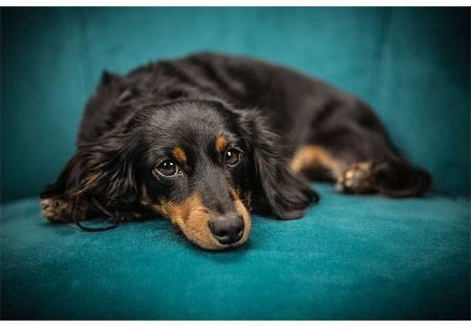 Как убрать собачий запах в квартире