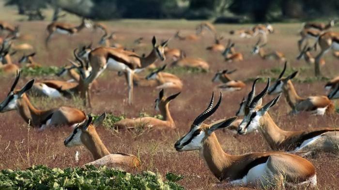 Какое из этих животных относится к газелям