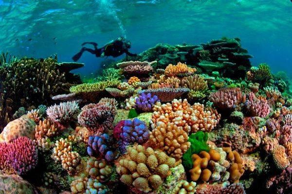 Тихий океан фото на карте