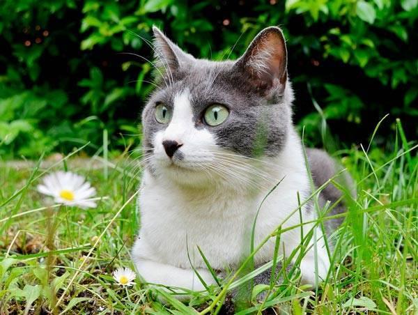 Сочинение про котенка 2 класс