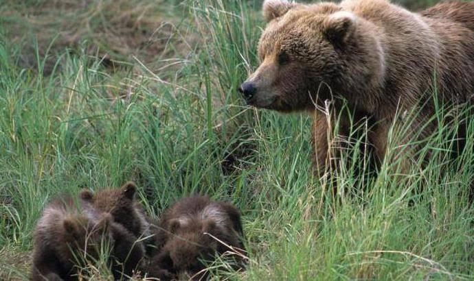 Интересные факты о млекопитающих