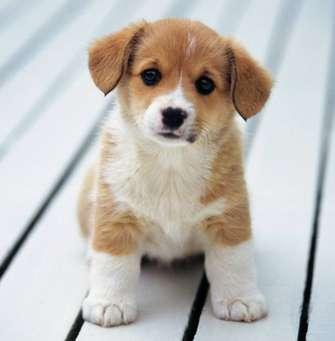 Сочинение на тему мой любимый питомец собака