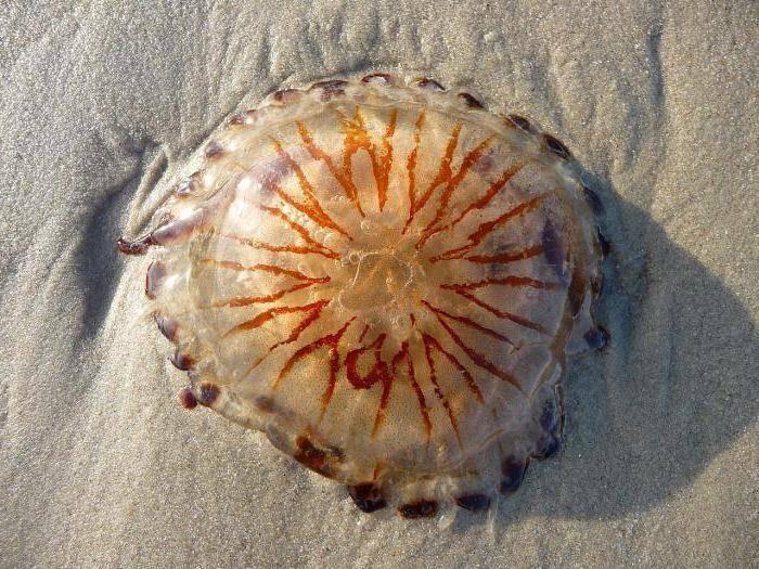 Где обитают медузы