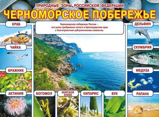 Перечисли основные природные зоны россии