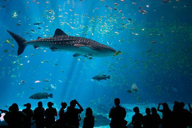 Акула какой класс