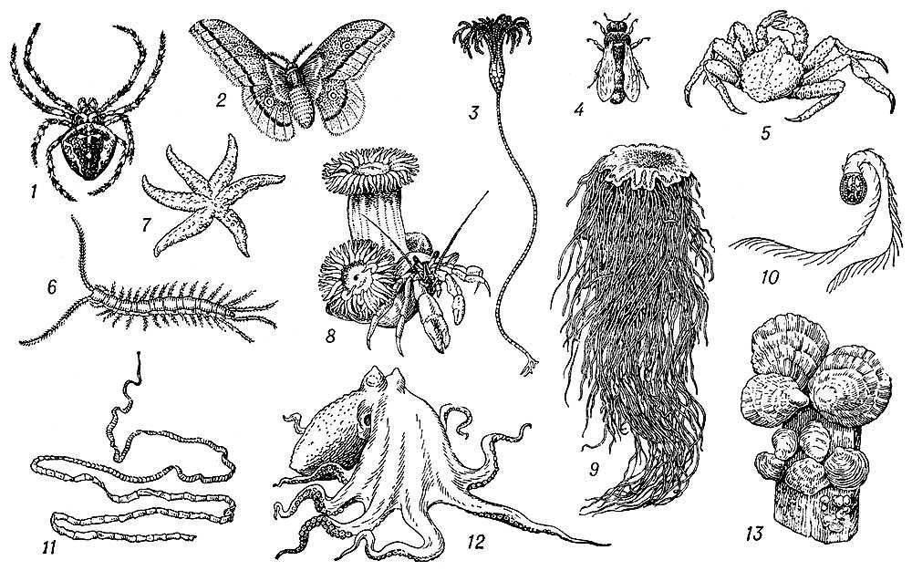Беспозвоночные насекомые