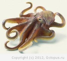 Есть ли у осьминога уши