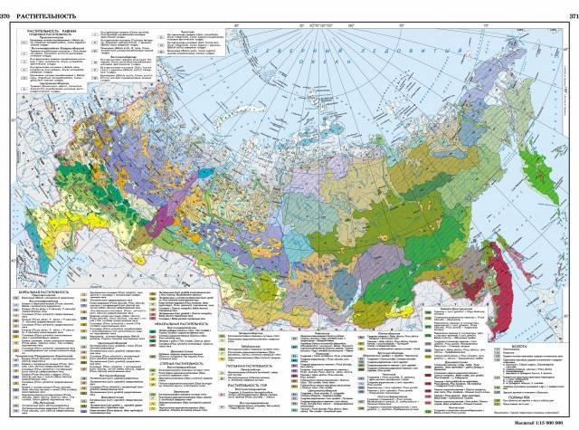 Карта растительности россии