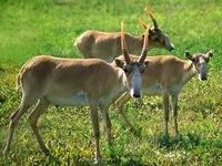 Интересные факты о животных степи