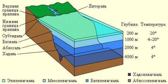 Природные зоны климатических поясов таблица