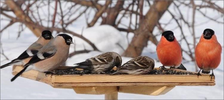 Перелётные и неперелётные птицы