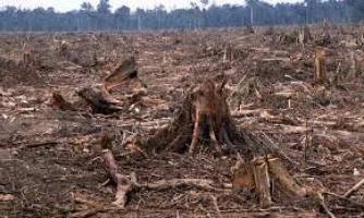 Обезлесивание как экологическая проблема