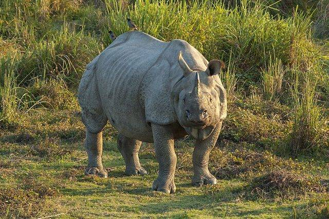Животные под угрозой вымирания