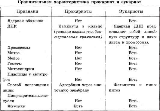 Прокариоты и эукариоты примеры