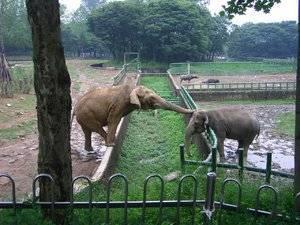 Сколько съедает слон в день