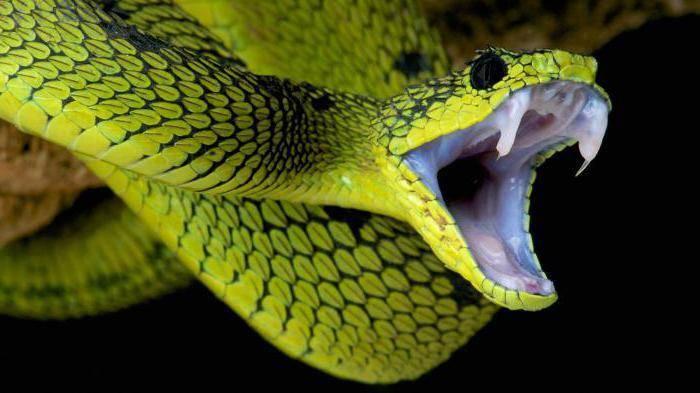 Череп змеи
