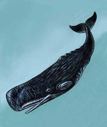 Разновидность китов названия