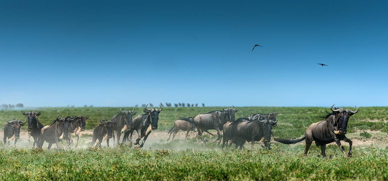 Животные африки фото с названиями и описанием