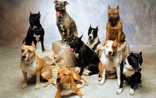 Какие существуют породы собак