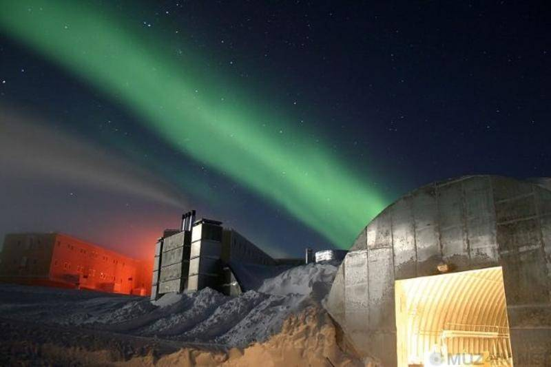 Обитатели южного полюса