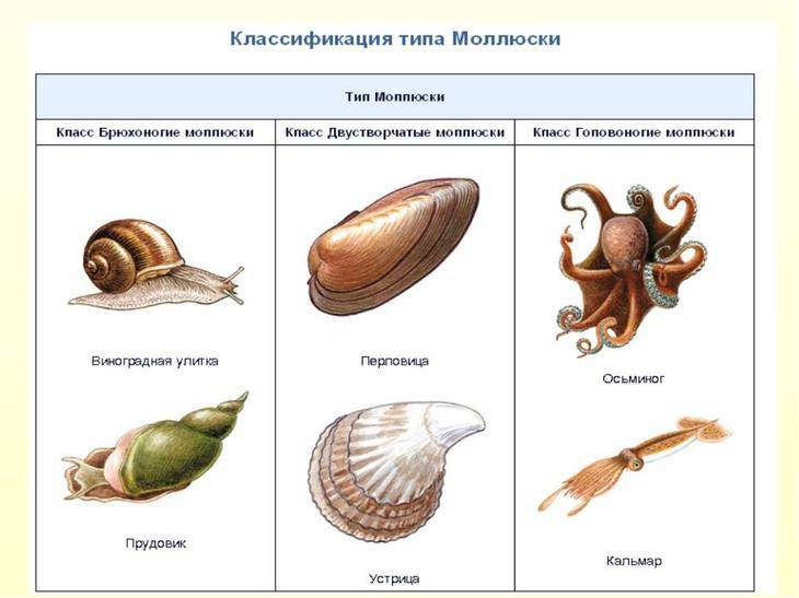 Какие существа живут только в морских водоемах
