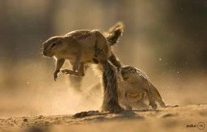 Животный мир пустынь и полупустынь