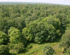 Растения и животные зоны лесов