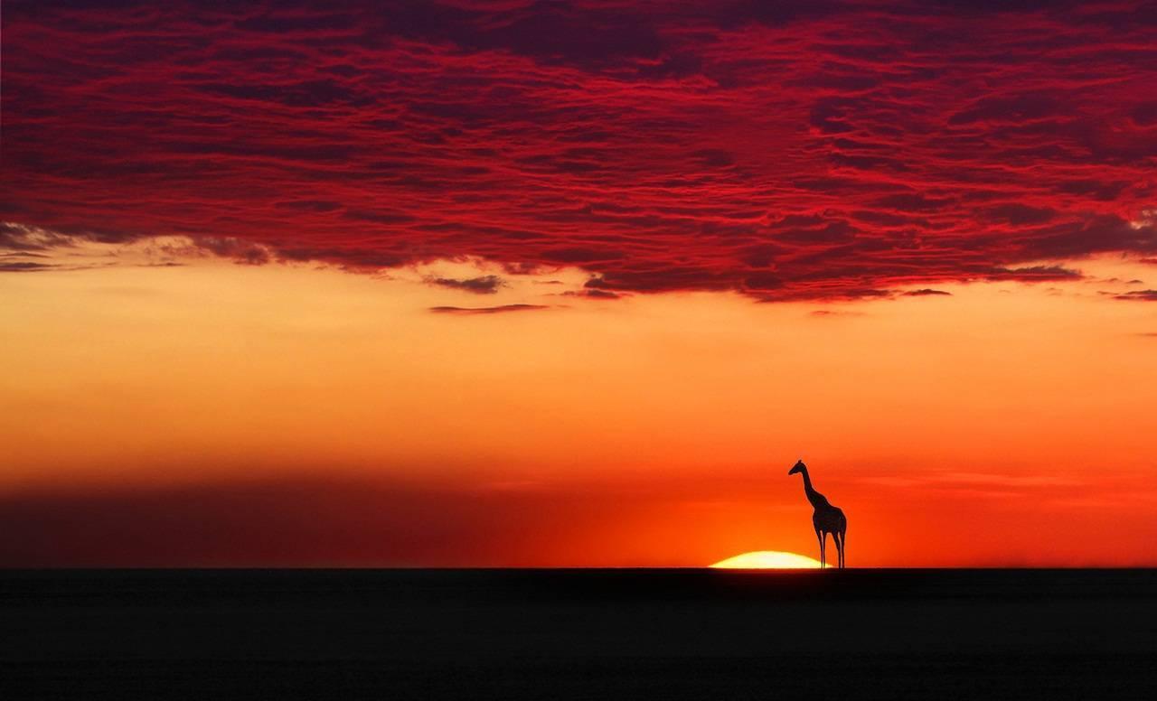 Глаза жирафа