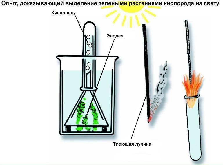 Процесс фотосинтеза не будет происходить без