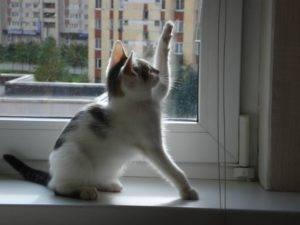 Сочинение на тему мой любимый котенок