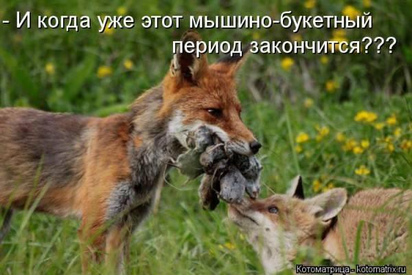 Что кушает лиса