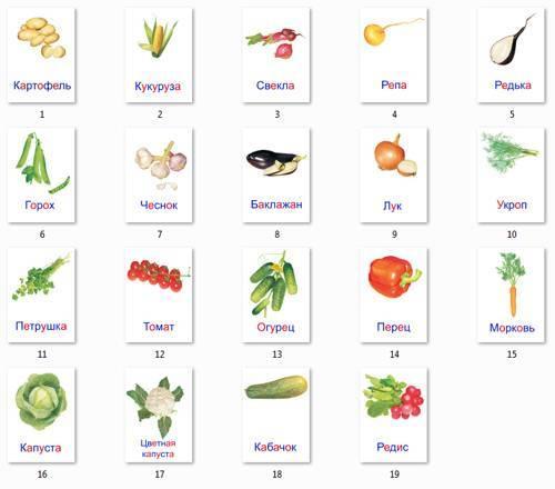 Овощи фото для детей