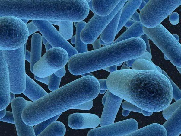 Прокариоты и эукариоты кратко