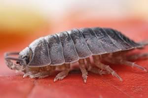 Сколько ног у насекомых ответ