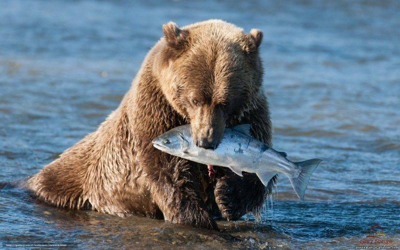 Где живёт бурый медведь