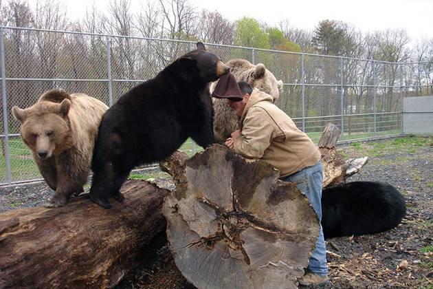 Классификация медведей