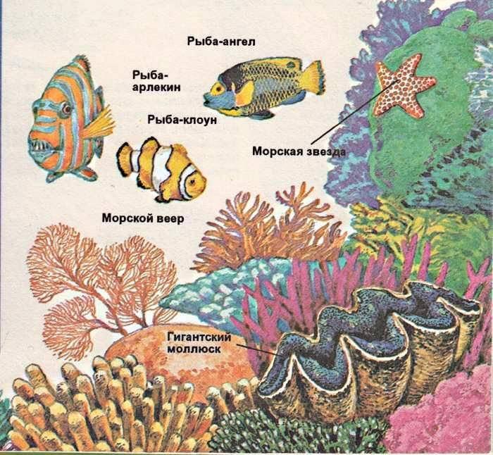 Обитатели сумеречной зоны океана