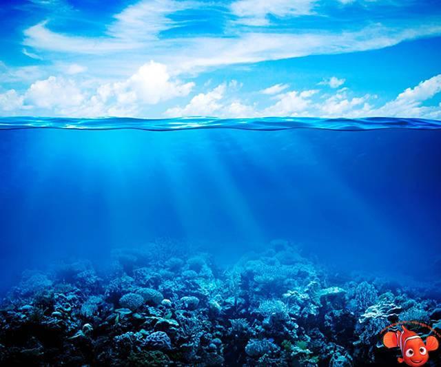 Значительную часть площади океана составляют моря