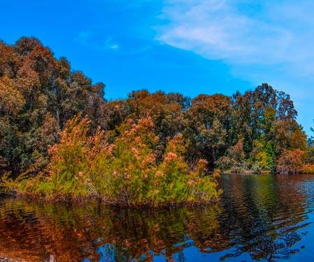 Сочинение на тему красота природы